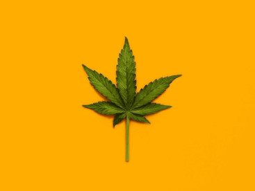Medical cannabis is on the rise in Australia, but we still don't know a lot about how it works