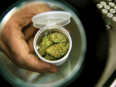 Turnbull 'foolish' to stand in the way of medical marijuana