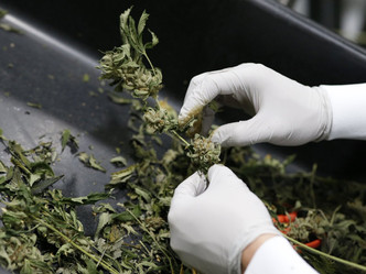 Coronavirus could accelerate US cannabis legalisation