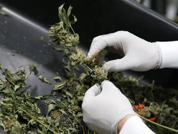 Coronavirus could accelerate US cannabis legalisation