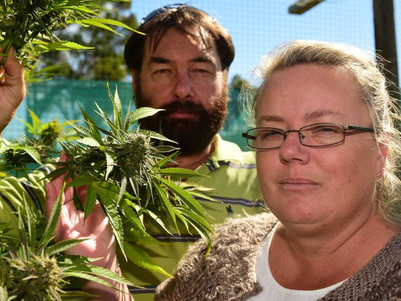Medicinal cannabis advocates urge government to act