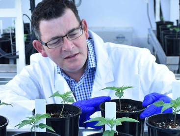 New Australian gov report for medicinal cannabis and driver safety