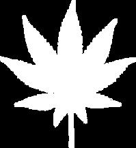 www.cannabisclubaustralia.com