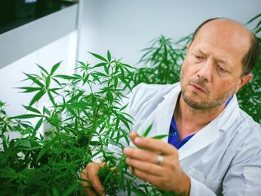 Medicinal cannabis mouthwash could help combat COVID-19