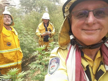 Firefighters stumble across a huge cannabis crop as they fight horror bushfires in New South Wales