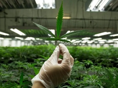Canada: Patient who uses 100 grams of cannabis per day granted right to possess a kilogram at a time
