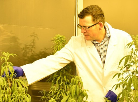 Cannabis boom not so certain as philanthropist lobbies for cheap imports