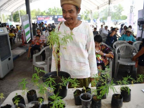 Health Minister Pushes for Farmers to Grow Cannabis in Thailand
