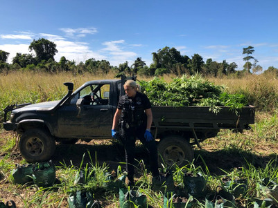 1,500 outdoor cannabis plants seized by QLD police