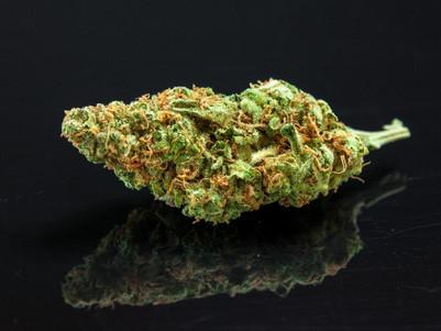Cannabis use in inflammatory bowel disease: new surveys announced