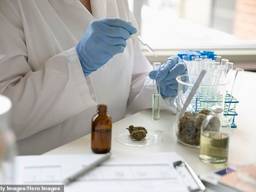 Children as young as eight are being treated for aggressive behaviour with CANNABIS in medical trial