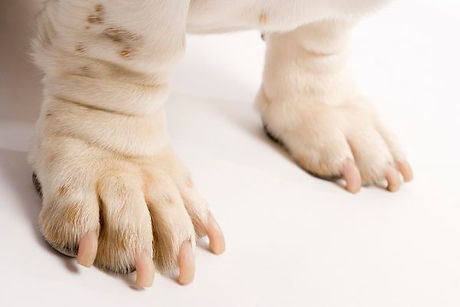 dog nails.jpg