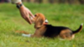 Dog-training-rules.jpg