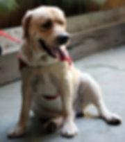 5986-dog-sit_edited.jpg