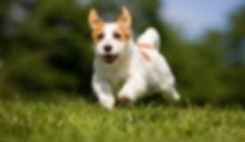 Dog-Coughs-After-Running.jpg