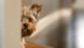Dog-Fear_.jpg
