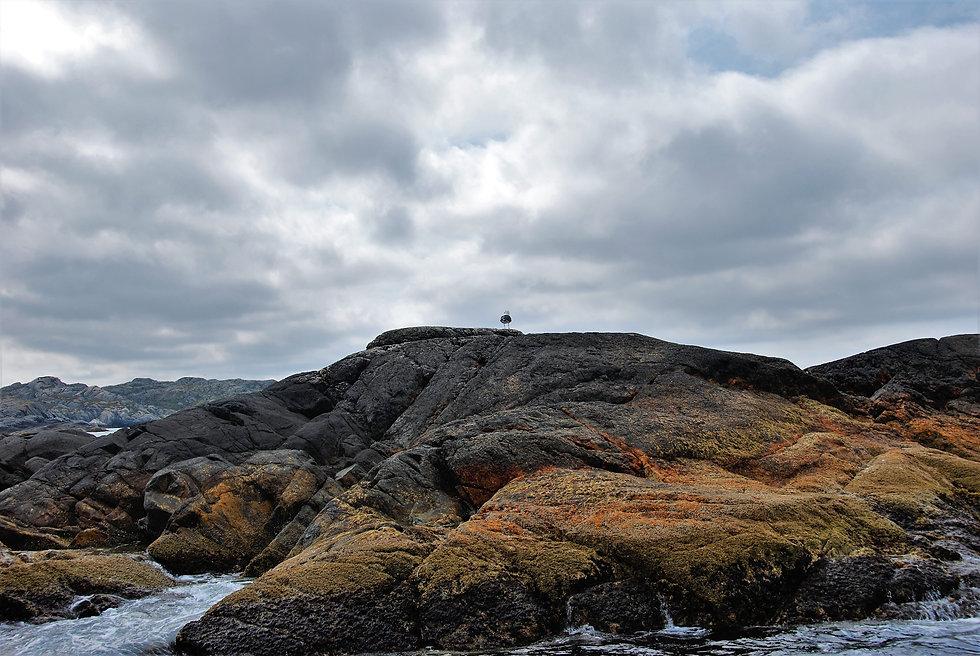 Måke på sjøfjell.jpg