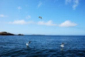 Måker på havet.jpg