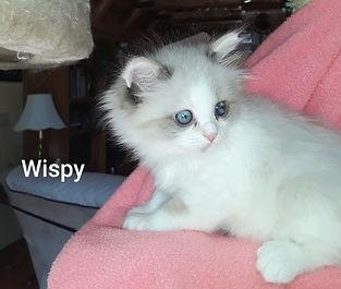 wispy_edited.jpg