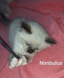 Nimbulus_edited.jpg