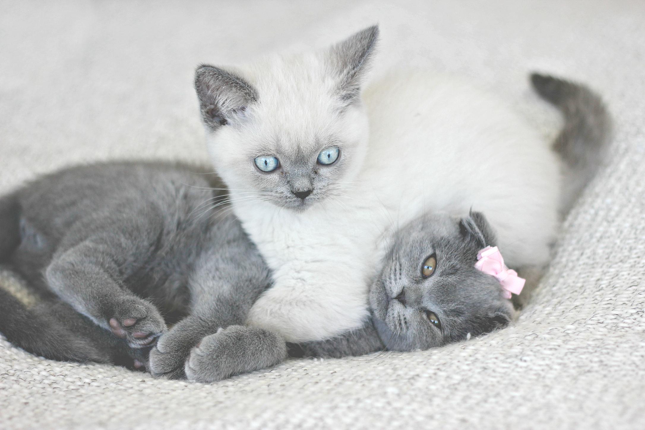 The kittens1