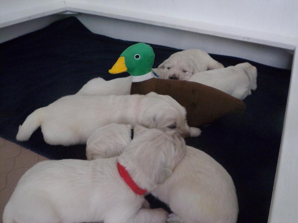 Puppies first friend!