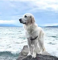 Picture of the dog named Chance.