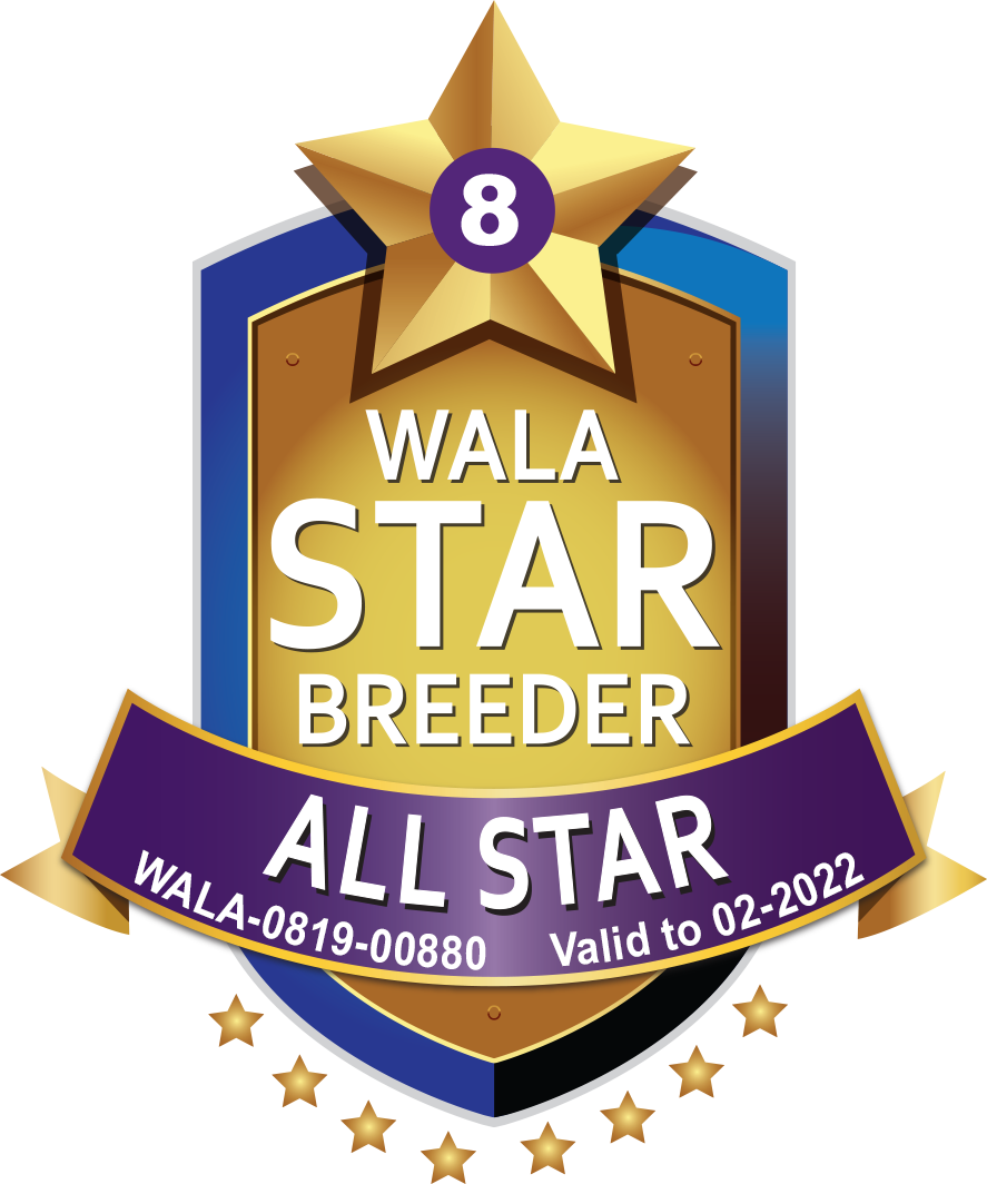 Weet Breeze All Star Logo 2021