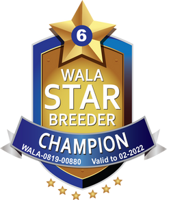 Weet Breeze Champion Logo 2021