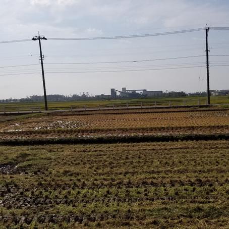 台風21号の爪痕と稲刈り