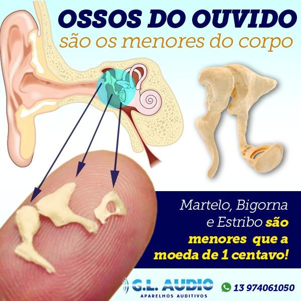 Ossos do ouvido são os menores do corpo