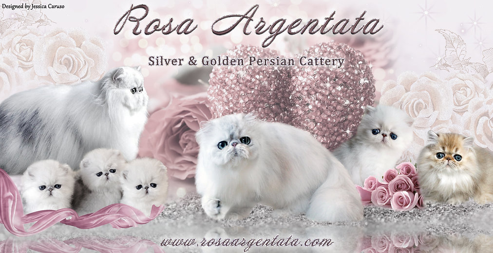 Rosa Argentata