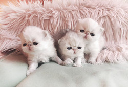 arielle babies