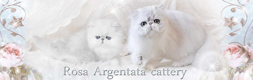 Rosa Argentata.jpg