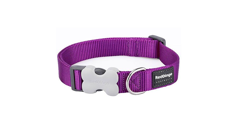 Red Dingo Dog Collar | Classic Purple