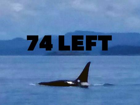 The Last Orca
