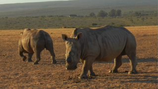 South Africa Highlights