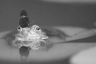Frog_edited.jpg