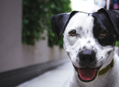 Great Local Rescues in the Charlotte Area