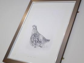 Partridge-7.jpg