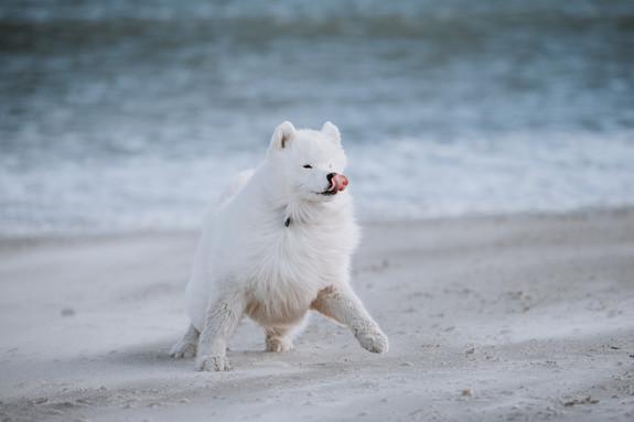 rhode island dog photographer