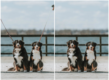 My dog can't be off leash - can we still take photos?
