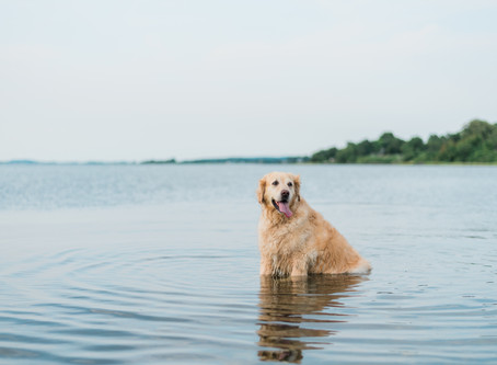 Social distancing with your dog for COVID-19
