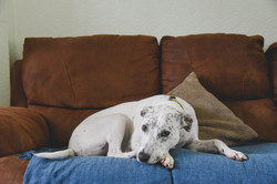 rhode island dog photography