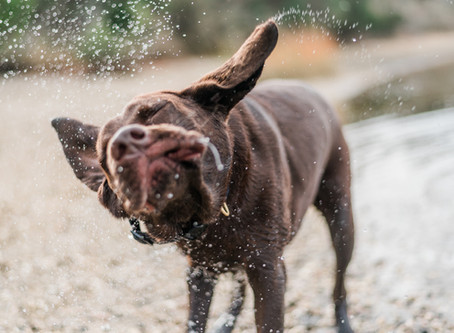 10 Things to do with your dog on a rainy day