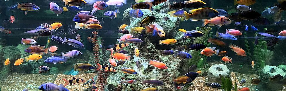 3500 liter Cichlid Display Aquarium