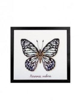 "Kit tableau ""Papillon Pereronia"" Bergère de France"
