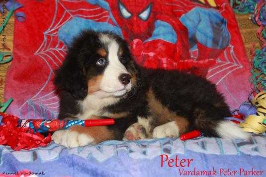 Vardamak Peter Parker
