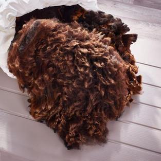 Coloured Ryeland fleece