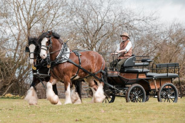 Coldcroft Shire Horse and Carriage.jpg